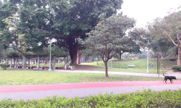 萬大線青年公園一樓住辦,台北市萬華區中華路二段